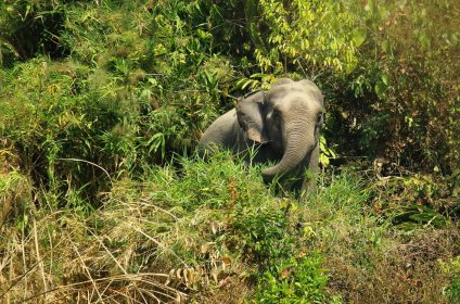Himchari_National_Park_3 vromonbondhu